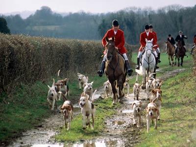 fox-hunting-1.jpg